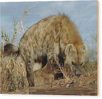 Out Of Africa Hyena 1 Wood Print