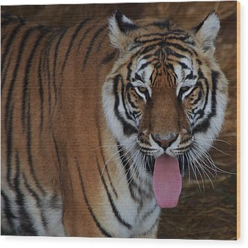 Out Of Africa  Tiger 2 Wood Print