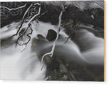 Out On A Limb Wood Print