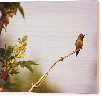 Wood Print featuring the photograph Out On A Limb by Peggy Collins