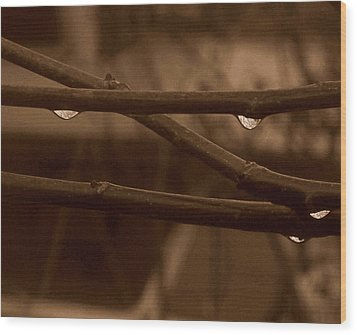 Wood Print featuring the photograph Out On A Limb by Suzy Piatt