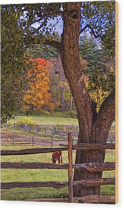 Out To Pasture Wood Print by Joann Vitali