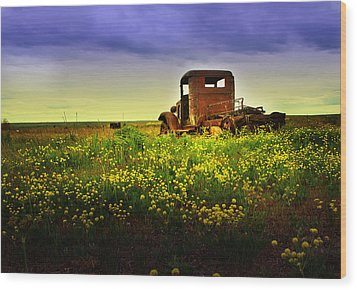 Out To Pasture Wood Print by Sonya Lang