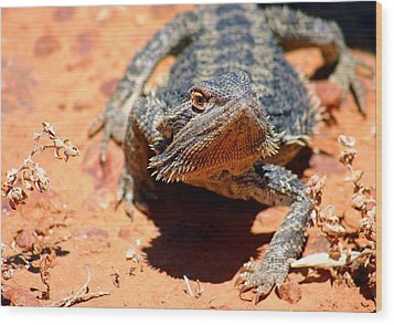 Wood Print featuring the photograph Outback Lizard 2 by Henry Kowalski