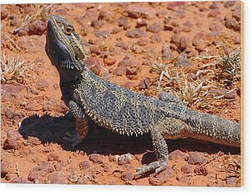 Wood Print featuring the photograph Outback Lizard by Henry Kowalski