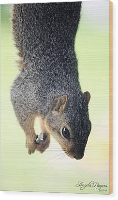 Outdoor Life - Squirrel 2 Wood Print by Angela Rogers