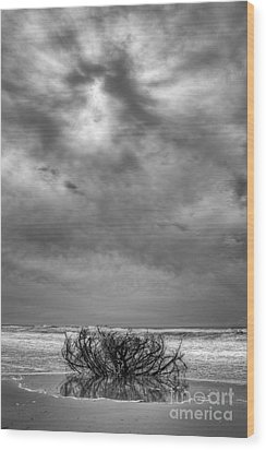 Outer Banks - Driftwood Bush On Beach In Surf IIi Wood Print by Dan Carmichael