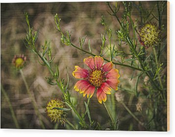 Wood Print featuring the photograph Outer Banks Wildflower by Bradley Clay