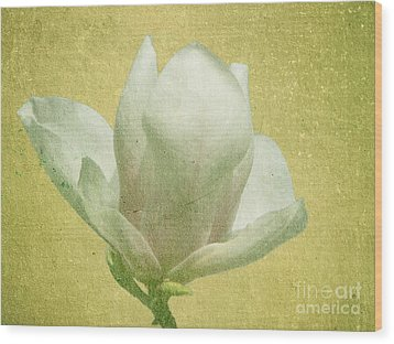 Outer Magnolia Wood Print by Jeff Kolker