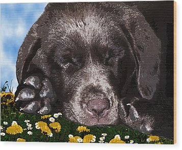 Outside Portrait Of A Chocolate Lab Puppy  Wood Print by Chris Goulette