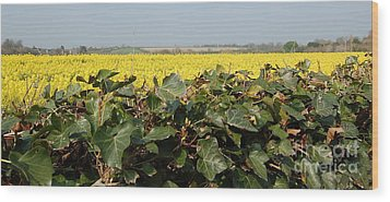 Wood Print featuring the photograph Over The Hedge by Linda Prewer