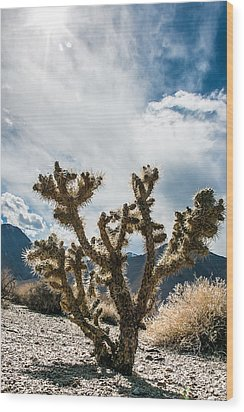 Owens Valley Cholla Wood Print by Jan Davies