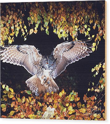 Owl About To Land Wood Print by Manfred Danegger