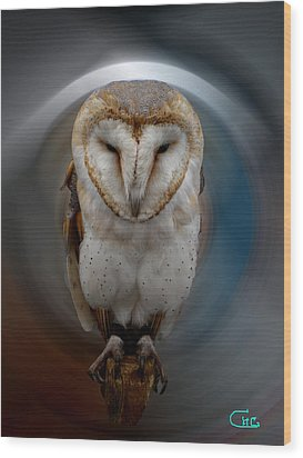 Owl Alba  Spain  Wood Print