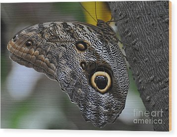Wood Print featuring the photograph Owl Butterfly by Bianca Nadeau
