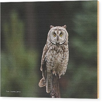 Owl In The Forest Visits Wood Print by Tom Janca