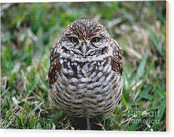 Owl. Best Photo Wood Print by Oksana Semenchenko