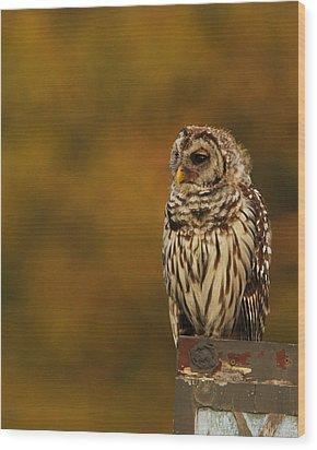 Owl On A Fence Wood Print