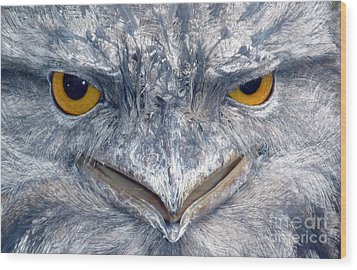 Owl Wood Print by Sandro Rossi