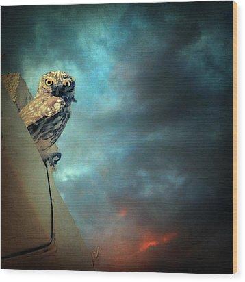 Owl Wood Print by Taylan Apukovska