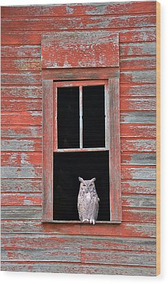 Owl Window Wood Print by Leland D Howard