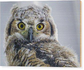 Owlet Close-up Wood Print