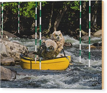 Owlets In A Canoe Wood Print by Les Palenik