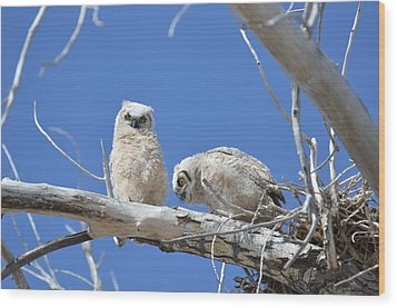 Owlets In White Wood Print