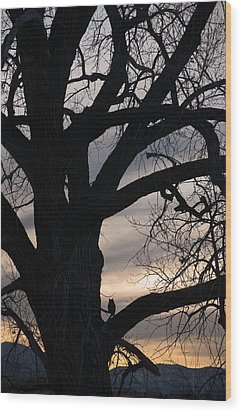 Owls Roost Wood Print