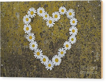Oxeye Daisy Heart Wood Print by Tim Gainey
