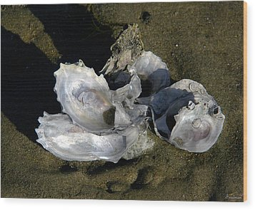 Oyster Collage Wood Print by Michael Friedman