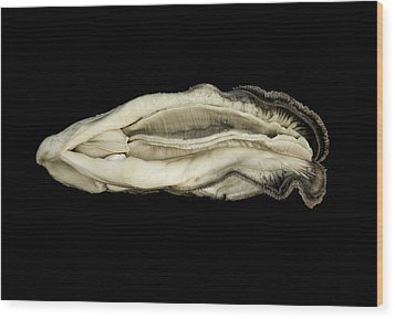 Oyster Suspended In Darkness Wood Print by Andy Frasheski