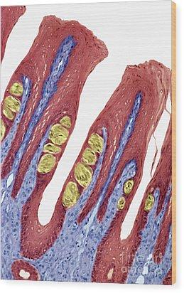 P4780084 - Taste Buds Lm Wood Print by Spl