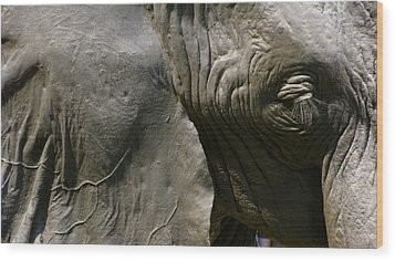 Wood Print featuring the photograph Pachyderm by Jennifer Wheatley Wolf