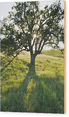 Wood Print featuring the photograph Pacific Coast Oak Malibu Creek by Kyle Hanson