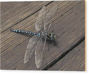 Pacific Forktail Wood Print by I'ina Van Lawick