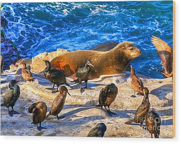 Wood Print featuring the photograph Pacific Harbor Seal by Jim Carrell