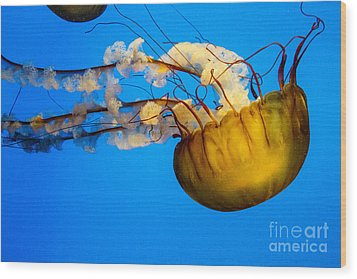 Pacific Nettle Jellyfish Wood Print