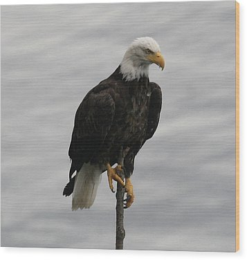 Pacific Northwest Eagle IIi Wood Print by Mary Gaines