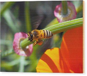 Packin Poppy Pollen Wood Print