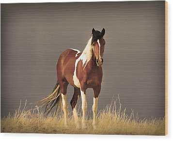 Paint Filly Wild Mustang Sepia Sky Wood Print