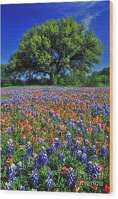 Paintbrush And Bluebonnets - Fs000057 Wood Print
