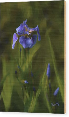 Painted Alaskan Wild Irises Wood Print by Penny Lisowski