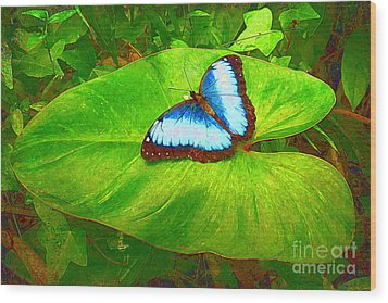 Painted Blue Morpho Wood Print