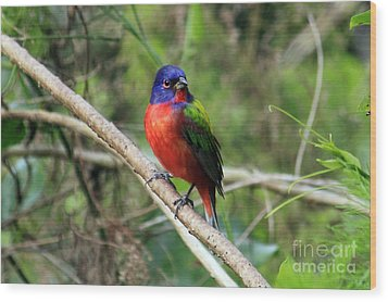Wood Print featuring the photograph Painted Bunting Photo by Meg Rousher