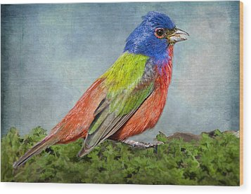 Painted Bunting Portrait Wood Print by Bonnie Barry