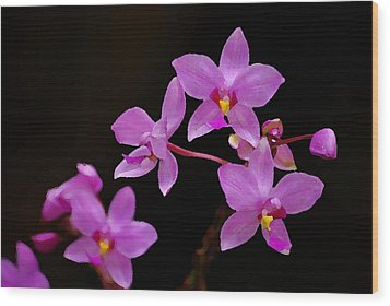 Wood Print featuring the photograph Painted Ground Orchids by Lorenzo Cassina