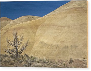 Wood Print featuring the photograph Painted Hills Tree by Sonya Lang