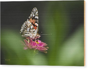 Painted Lady Butterfly At Rest Wood Print by Christina Rollo