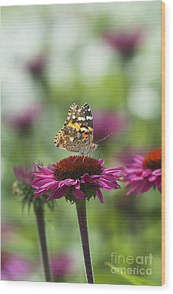 Painted Lady Butterfly  Wood Print by Tim Gainey